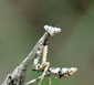 prayingmantis's picture